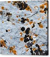 Abstract Orange Lichen 1 Acrylic Print