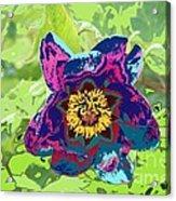 Abstract Peonies Acrylic Print