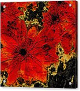 Abstract Red Flower Art  Acrylic Print
