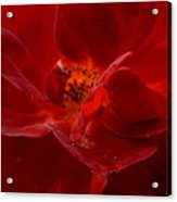 Abstract Red Rose 1a Acrylic Print