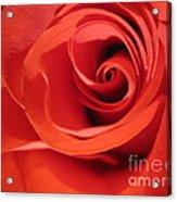 Abstract Orange Rose 9 Acrylic Print