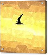 Abstract Seagull Flight Acrylic Print