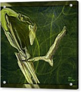Abstract Snake And Bird Acrylic Print