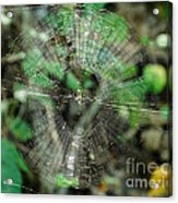 Abstract Spider Web Acrylic Print