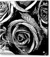 Dark Star Roses For David Bowie Acrylic Print