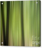 Abstract Trees In The Forest Acrylic Print