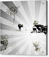 Abstract Vintage Cows Acrylic Print