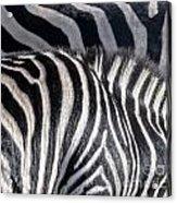 Abstract Zebra Acrylic Print