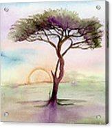 Acacia Sunrise Acrylic Print