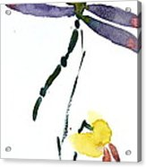 Acacion Dragonfly Acrylic Print