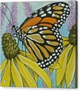 Aceo Monarch On Wild Grey Headed Coneflower Acrylic Print