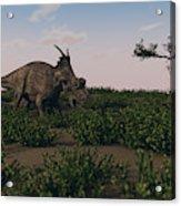 Achelousaurus Walking Amongst Swamp Acrylic Print