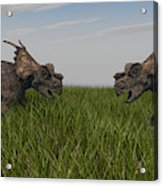 Achelousauruses Confrontation In Swamp Acrylic Print