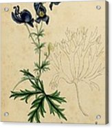 Aconitum Napellus By Sowerby Acrylic Print by Philip Ralley