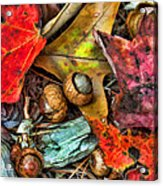 Acorns And Leaves Acrylic Print