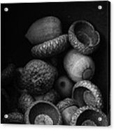 Acorns Black And White Acrylic Print