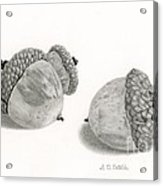 Acorns- Black And White Acrylic Print