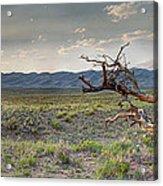 Across A Great Wilderness Acrylic Print
