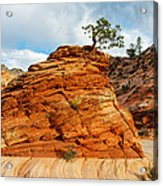 Adaptable Pinyon Pine Acrylic Print