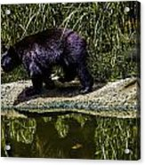 Adhd Bear Acrylic Print
