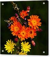 Adirondack Flowers Acrylic Print