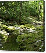 Adirondack Stream Acrylic Print