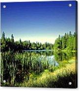 Admiring The Beauty At Woodbridge Lake Acrylic Print