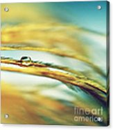 Adopt The Pace Of Nature- Feather Photograph Acrylic Print