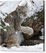 Adorable Baby Lynx In A Snowy Forest Acrylic Print