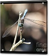 Adorable Dragonfly With Border Acrylic Print