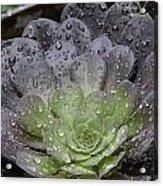 Adorned By Raindrops Acrylic Print