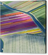 Aerial View Of Flower Fields In Spring Acrylic Print