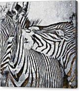 Affection Acrylic Print