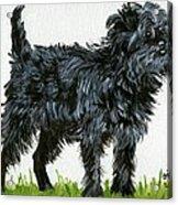 Affenpinscher Dog Acrylic Print