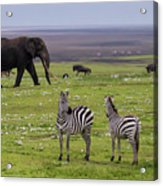 Africa Tanzania African Elephant Acrylic Print