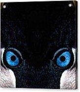 African Crowned Crane X2 Acrylic Print