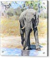 African Elephant At Waterhole Acrylic Print