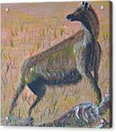 African Hyena Acrylic Print