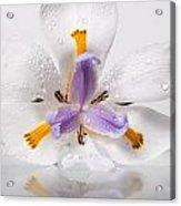African Irises Xv Acrylic Print