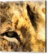 African Lion Eyes Acrylic Print