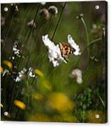 African Monarch Butterfly In Garden Acrylic Print