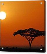 African Morning Acrylic Print