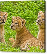 African Princesses Acrylic Print by Ashley Vincent