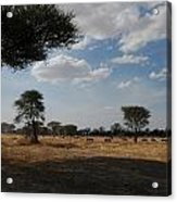 African Series Clouds Acrylic Print