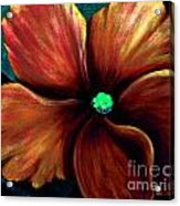 African Violet Golden Red Acrylic Print