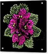 African Violets Bedazzled Acrylic Print