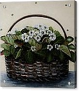 African Violets In Basket Acrylic Print