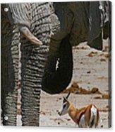 African Waterhole Acrylic Print