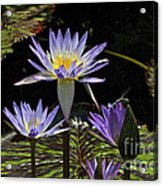 African Waterlily Dazzle -- Plus Dragonfly Acrylic Print