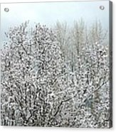 After A Light Snowfall Acrylic Print
